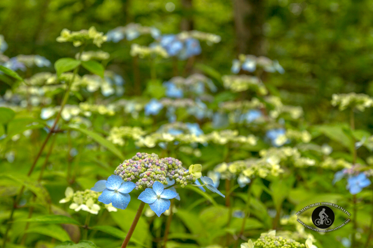 Mount Congreve Gardens - blue and multi-colored flowers