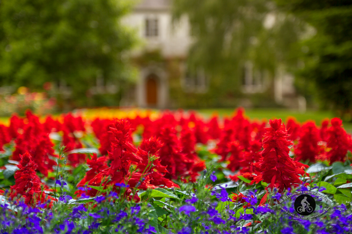 Red flowers in front of University College Cork - County Cork