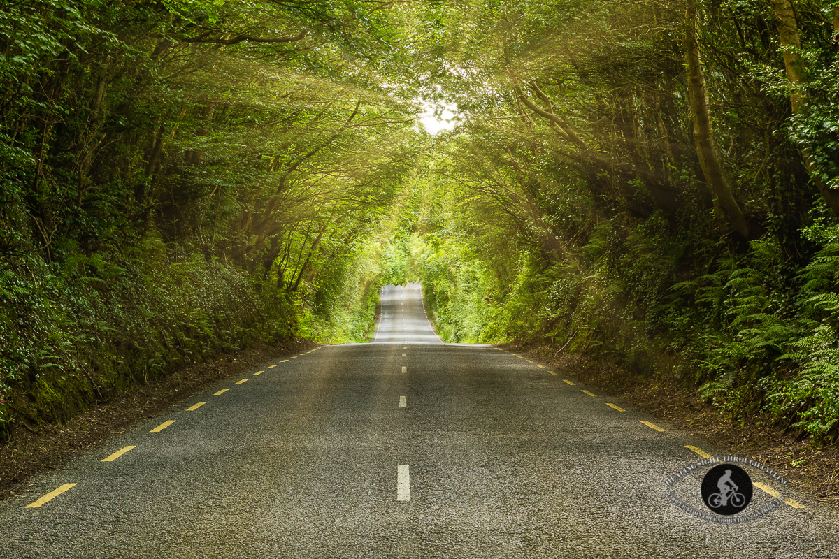 Road through tree tunnel - County Wexford - sunrays