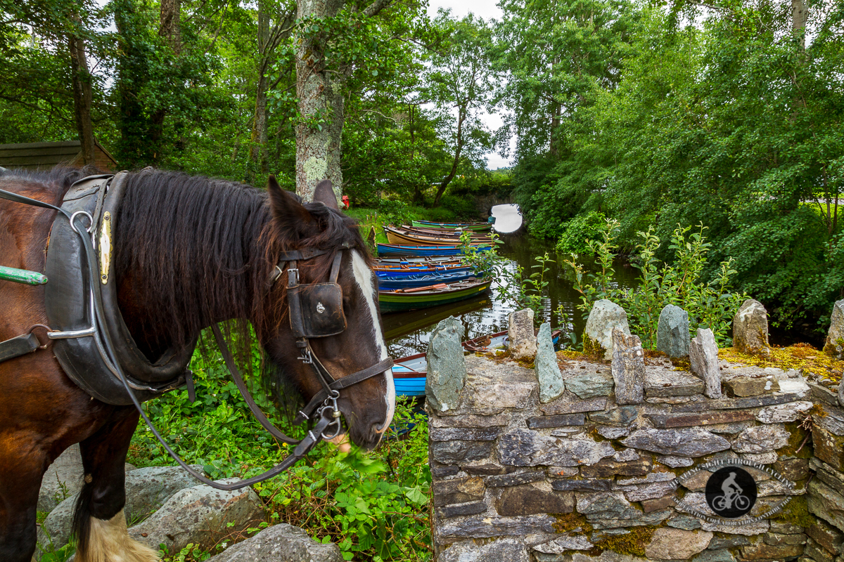 Horse and boats by an arched bridge - Castle Ross Killarney - County Kerry