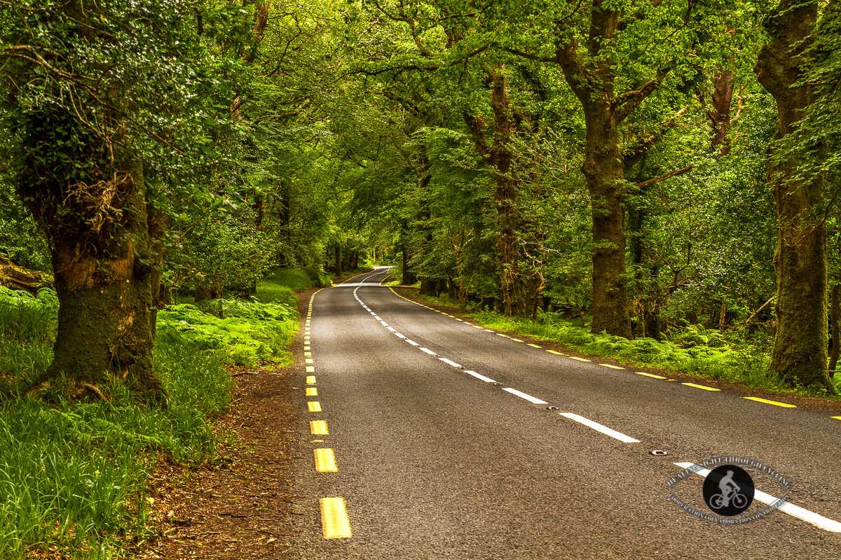 Road through the trees in Killarney National Forest