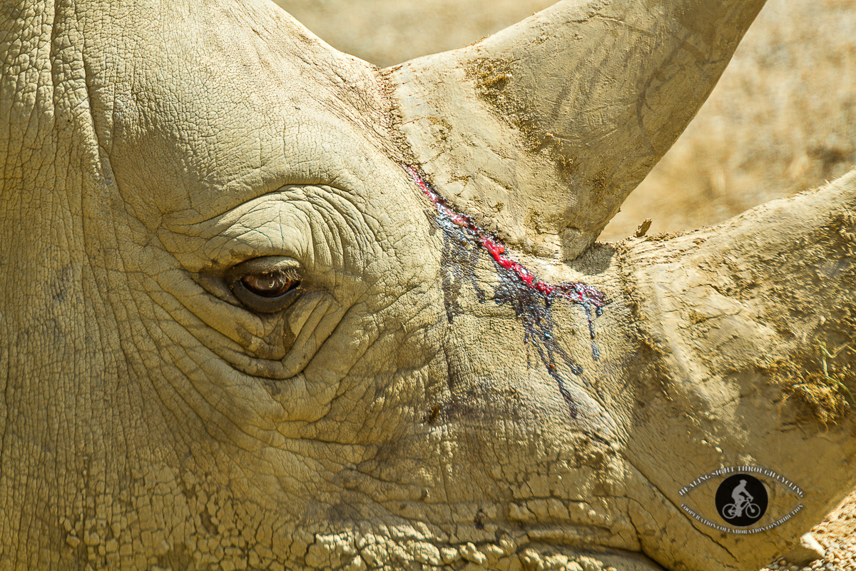 Wounded Rhinoceros