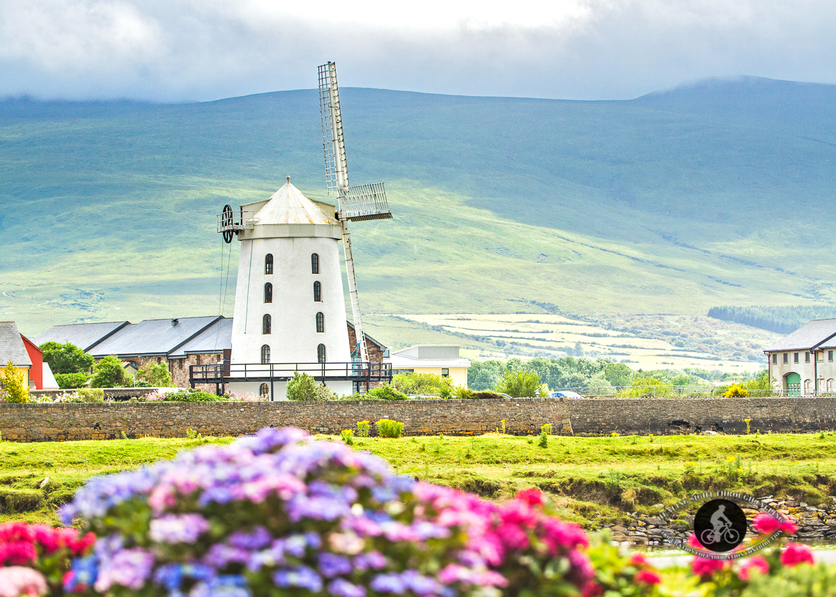 Blennerville Windmill from the side - over flowers
