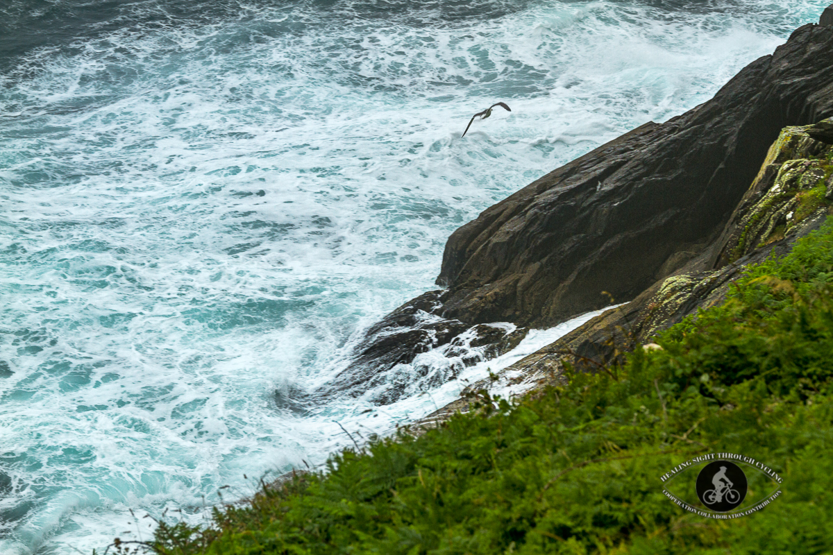 Seagull over waves in the Wild Atlantic Way near Dingle