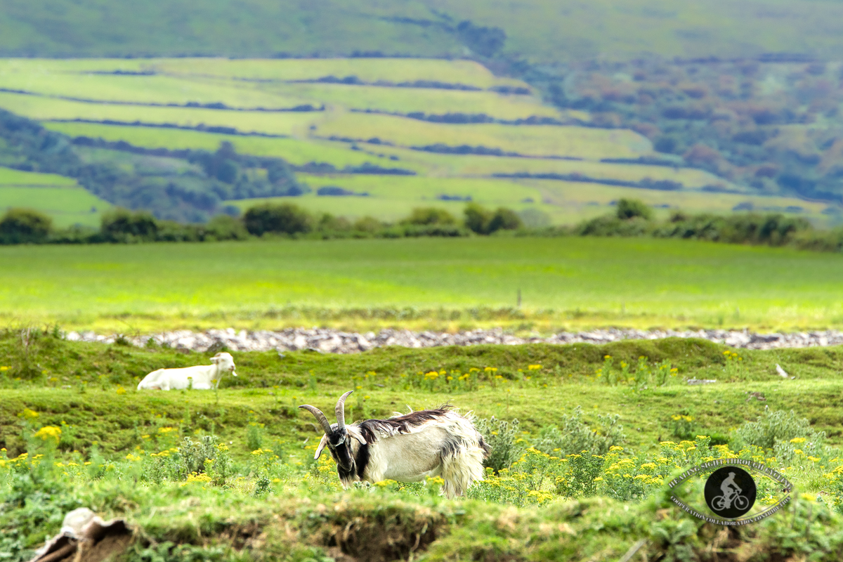 Sheep at the bottom of a mountain - close