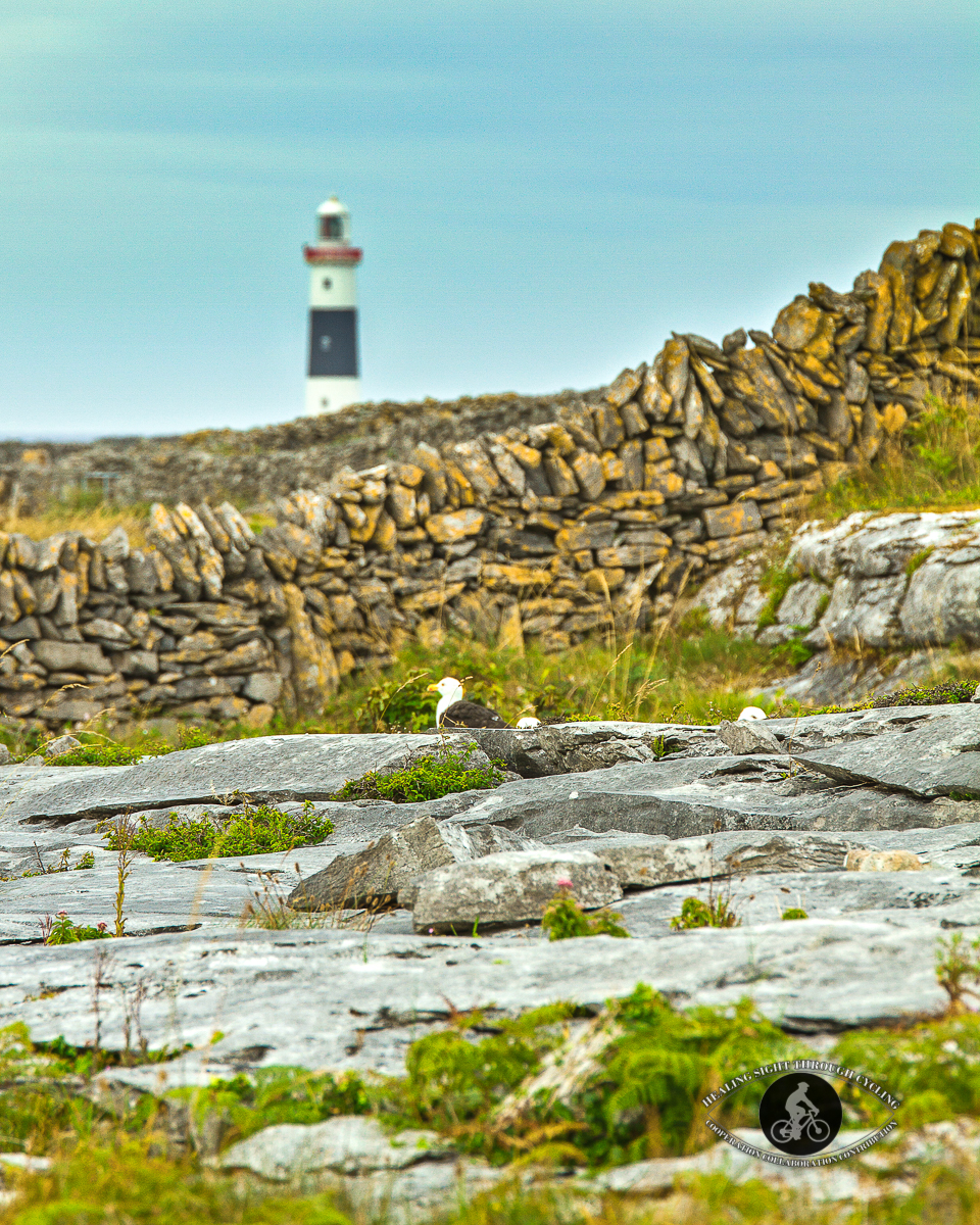 Seagulls on the rocks in front of Inisheer Lighthouse