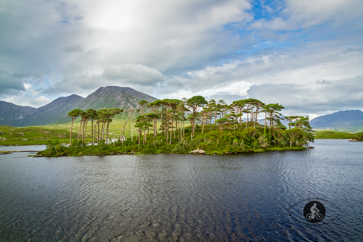 Pines Island Derryclare Lough - County Galway - close up