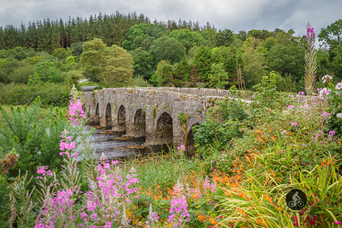 Side view of flowers in front of 7 arch bridge over Lough Feeagh - County Mayo