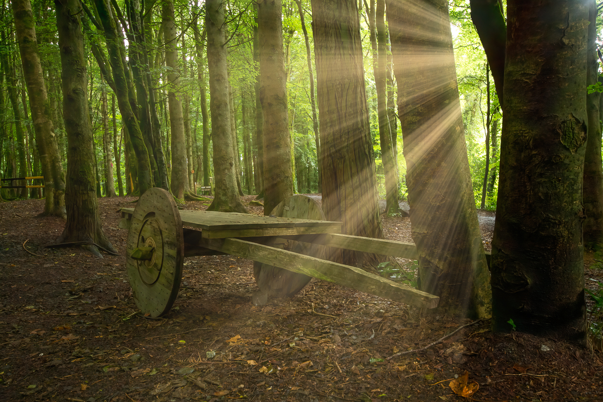 Cart in a Forest at Beleek Castle from the lawn in Ballina County Mayo - sunrays